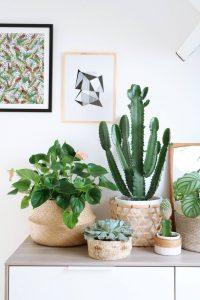 cestas vegetales, ebeka blog